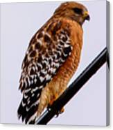 Bird On A Wire With Attitude Canvas Print