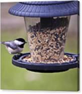 Bird On Feeder Canvas Print