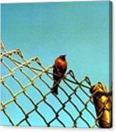 Bird On Fence Canvas Print