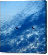 Bird Set Free II  Canvas Print