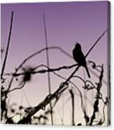 Bird Sings Canvas Print