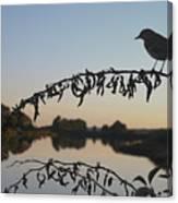 Bird Song At Last Light Canvas Print