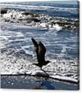 Bird Taking Flight On The Shore Canvas Print