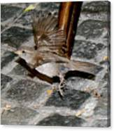 Bird Taking Flight Canvas Print