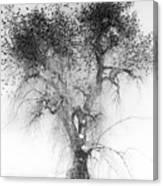 Bird Tree Land Bw Fine Art Print Canvas Print