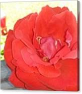 Bird Watching Red Rose Canvas Print