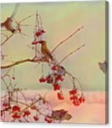 Bird Waxwing Canvas Print