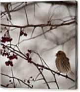 Bird With Berry Canvas Print