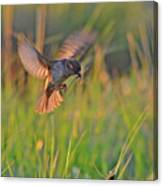 Bird With Prey Canvas Print