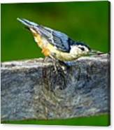 Bird With The Seed Canvas Print