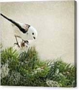 Birdie Stilllife Canvas Print