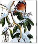 Birds 05 Varied Thrush On Arbutus Robert Bateman Sqs Robert Bateman Canvas Print