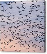 Birds A Flock Of Seagulls Canvas Print
