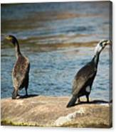 Birds And Lake Canvas Print