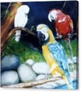 Birds At Rest Canvas Print