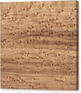 Birds-eye Pattern On Sugar Maple Wood Abstract In Nature Canvas Print