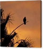 Birds Eye View Photograph Canvas Print