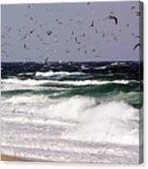 Birds Feeding Frenzy Canvas Print