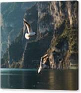 Birds Fishing Canvas Print