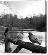 Birds I Canvas Print