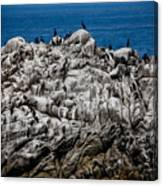 Bird's Island Canvas Print