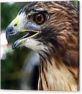 Birds Of Prey Series Canvas Print
