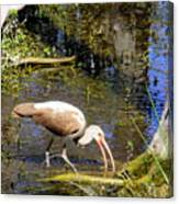 Birds Of The Everglades Canvas Print