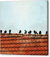 Birds On A Rooftop Canvas Print