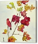 Birds On Maple Tree 12 Canvas Print