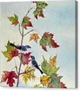 Birds On Maple Tree 7 Canvas Print