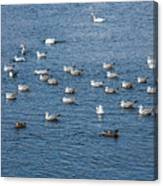 Birds On The Water Canvas Print
