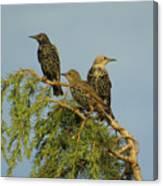 Birds-on-watch Canvas Print