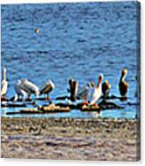 Birds Panorama Canvas Print