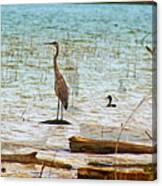 Birds Reflections Canvas Print