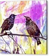 Birds Stare Nature Songbird  Canvas Print
