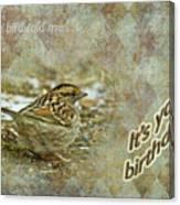 Birthday Greeting Card - White-throated Sparrow Songbird Canvas Print