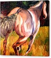 Birthday Poney Canvas Print