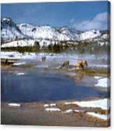 Biscuit Basin Elk Herd Canvas Print
