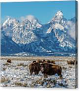Bison At The Tetons Canvas Print