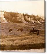Bison Firehole River Yellowstone Canvas Print