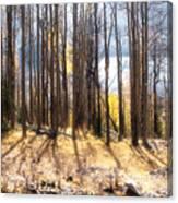 Bison Lake Canvas Print