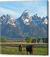 Bison Range Canvas Print