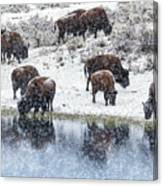 Bison Snow Reflecton Canvas Print