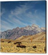 Bison The National Mammal Canvas Print