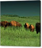 Bisons In The Prarie Canvas Print