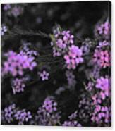 Bits Of Pink Canvas Print