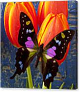 Black And Pink Butterfly Canvas Print