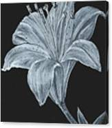 Black And White Asiatic Lily Canvas Print