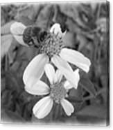 Black And White Bee Canvas Print