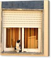 Black And White Cat On The Windowsill Canvas Print